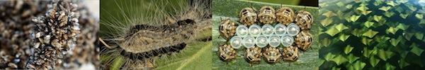 Khả năng thích nghi với môi trường đến khó tin của động vật 19