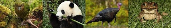 Những loài động vật nhỏ bé nhưng nguy hiểm nhất thế giới 13