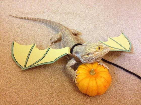 Thú cưng vừa đáng sợ vừa... đáng yêu trong trang phục Halloween 21