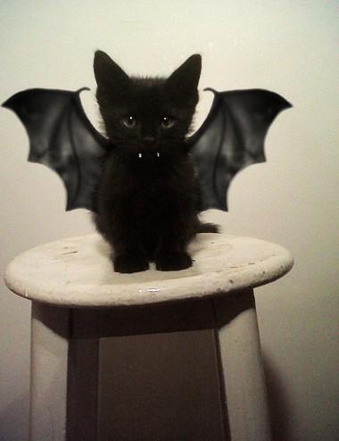 Thú cưng vừa đáng sợ vừa... đáng yêu trong trang phục Halloween 3