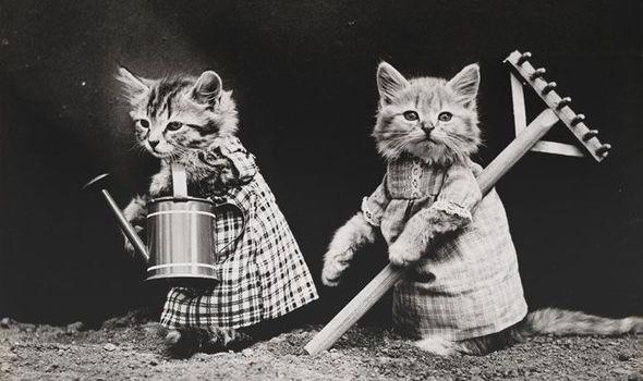 """Cùng """"soi"""" bộ ảnh chó mèo ngộ nghĩnh đầu tiên trong lịch sử 1"""