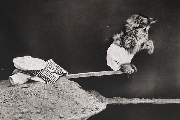 """Cùng """"soi"""" bộ ảnh chó mèo ngộ nghĩnh đầu tiên trong lịch sử 3"""