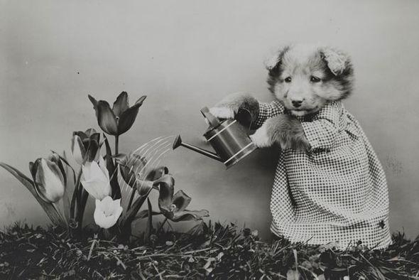 """Cùng """"soi"""" bộ ảnh chó mèo ngộ nghĩnh đầu tiên trong lịch sử 4"""