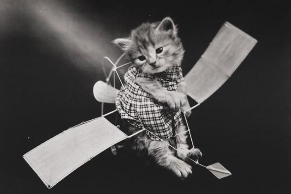 """Cùng """"soi"""" bộ ảnh chó mèo ngộ nghĩnh đầu tiên trong lịch sử 6"""