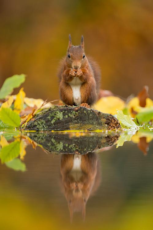 Chùm Ảnh Về Những Loài Vật Gặm Nhấm Xinh Xắn Tại Hà Lan 5