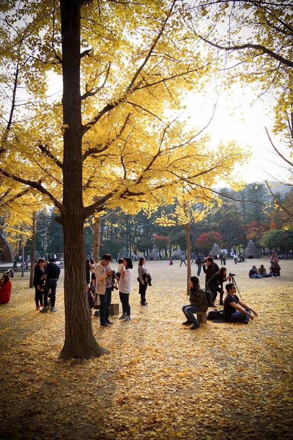 """Ngắm lá vàng mùa thu tuyệt đẹp tại nơi quay bộ phim """"Bản tình ca mùa đông"""" 2"""