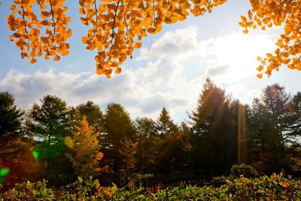"""Ngắm lá vàng mùa thu tuyệt đẹp tại nơi quay bộ phim """"Bản tình ca mùa đông"""" 1"""
