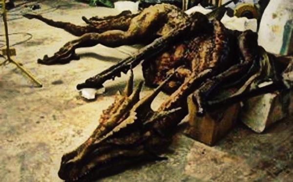 """Những ghi chép về loài rồng """"có thật"""" trong lịch sử 1"""