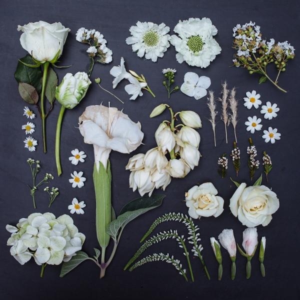 Mê mẩn bộ ảnh hoa, lá xếp theo tông màu 1