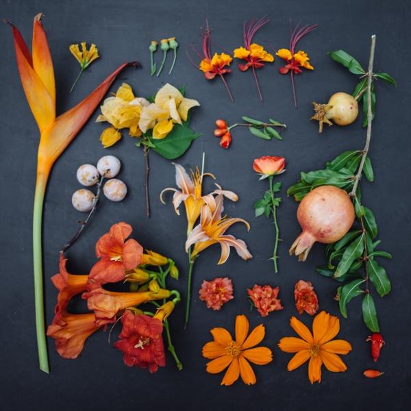Mê mẩn bộ ảnh hoa, lá xếp theo tông màu 2