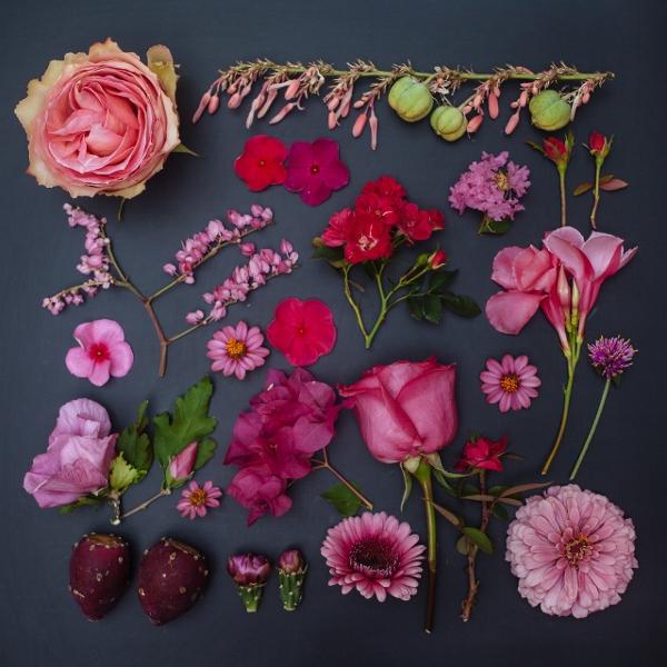 Mê mẩn bộ ảnh hoa, lá xếp theo tông màu 3
