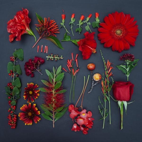 Mê mẩn bộ ảnh hoa, lá xếp theo tông màu 4