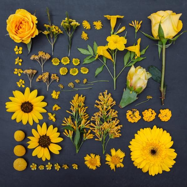 Kết quả hình ảnh cho Mê mẩn bộ ảnh hoa, lá xếp theo tông màu
