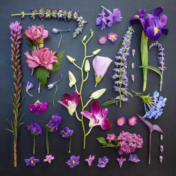 Mê mẩn bộ ảnh hoa, lá xếp theo tông màu 7