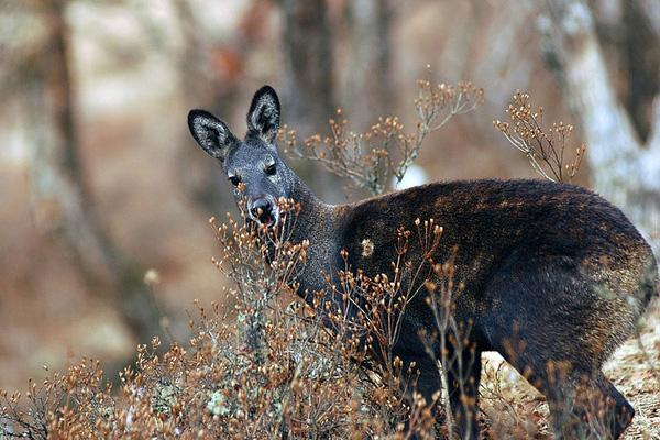 Những loài vật hoang dã tự tỏa mùi thơm giống hệt Hàm Hương 4