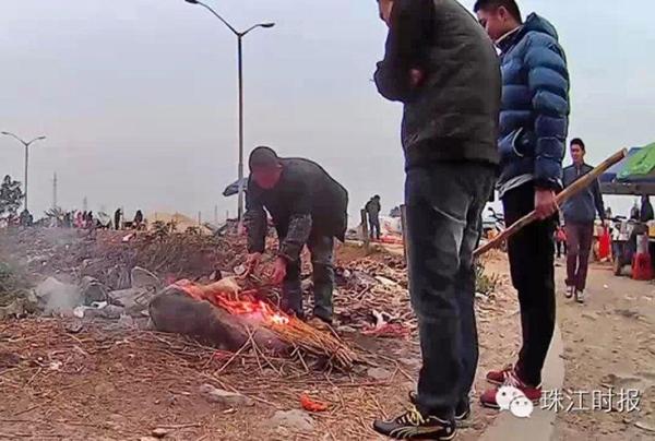Cảnh tượng giết chó mèo tại Trung Quốc khiến người thích ăn thịt chó cũng phải rợn người 2