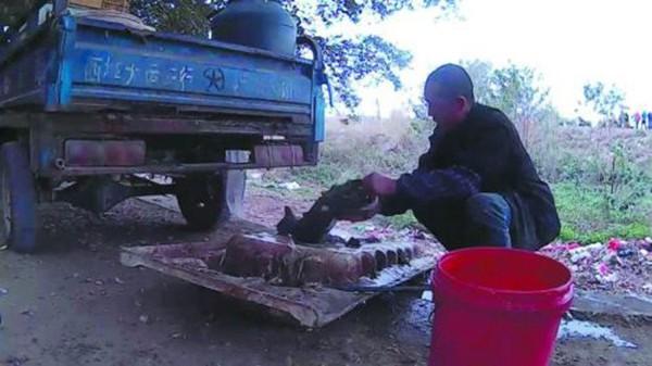Cảnh tượng giết chó mèo tại Trung Quốc khiến người thích ăn thịt chó cũng phải rợn người 4