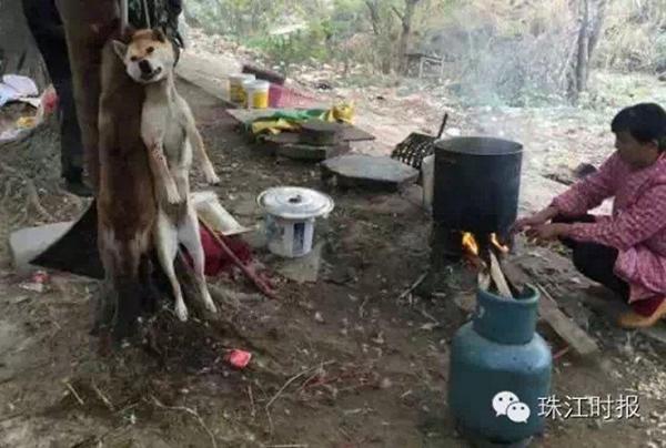 Cảnh tượng giết chó mèo tại Trung Quốc khiến người thích ăn thịt chó cũng phải rợn người 3