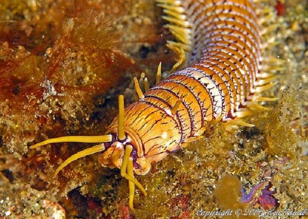5 loài sâu đáng sợ nhất hành tinh 2