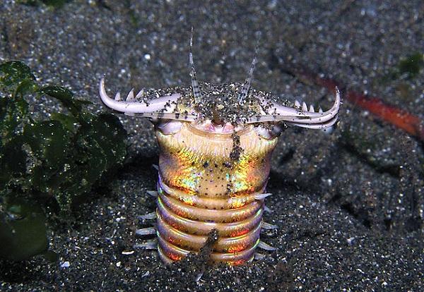 5 loài sâu đáng sợ nhất hành tinh 3