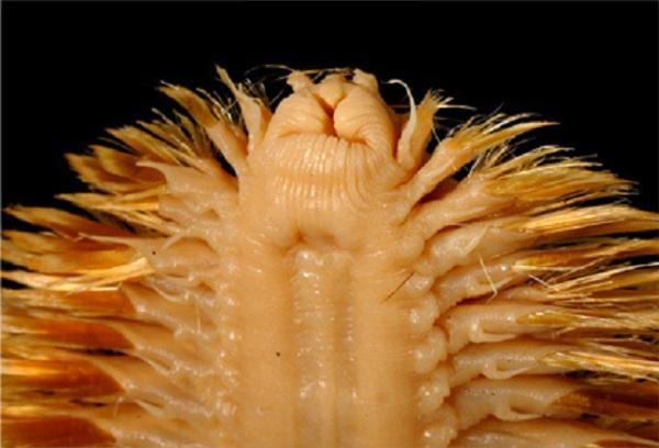 5 loài sâu đáng sợ nhất hành tinh 8