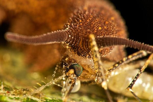 5 loài sâu đáng sợ nhất hành tinh 10