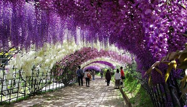 """Đẹp kinh ngạc vườn hoa """"tình yêu vĩnh cửu"""" ở Nhật Bản 10"""