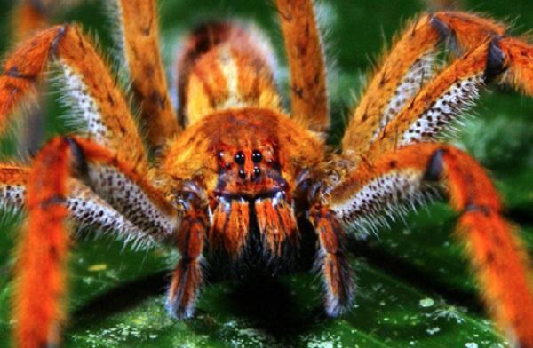 Những loài động vật nhỏ bé nhưng nguy hiểm nhất thế giới 12