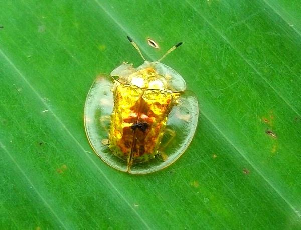 """""""Vẻ đẹp"""" hiếm có của các loài bọ trong tự nhiên 5"""
