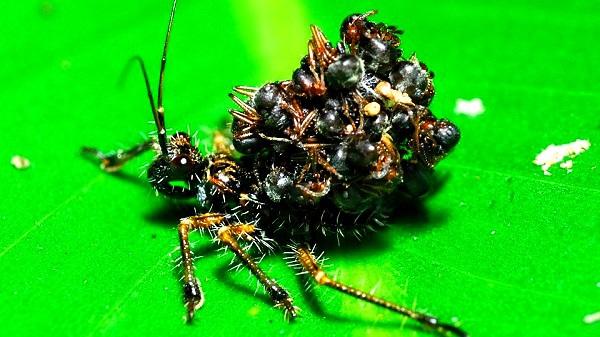"""""""Vẻ đẹp"""" hiếm có của các loài bọ trong tự nhiên 4"""