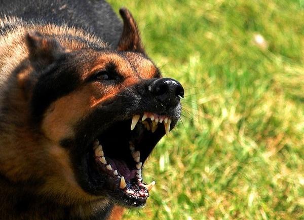 Giải mã những căn bệnh đáng sợ lây truyền từ động vật 5