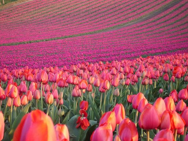 Những thiên đường hoa đẹp ngất ngây không thể không xem 3