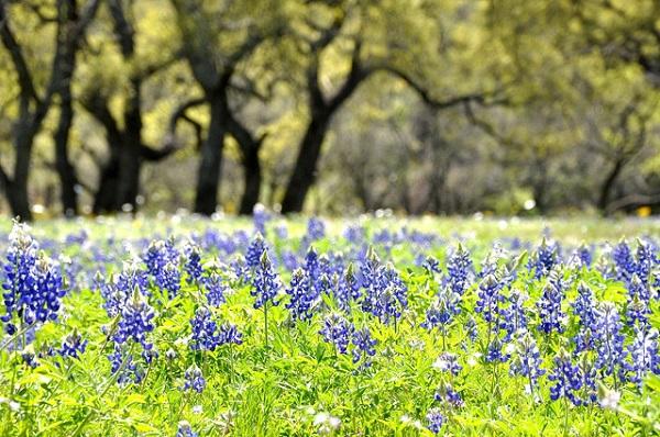 Những thiên đường hoa đẹp ngất ngây không thể không xem 7