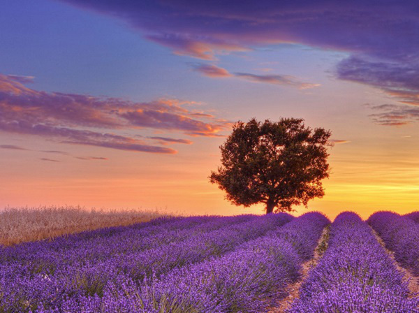 Những thiên đường hoa đẹp ngất ngây không thể không xem 10