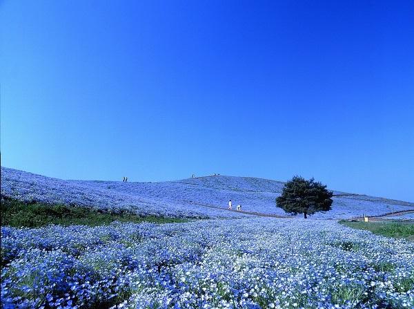 Những thiên đường hoa đẹp ngất ngây không thể không xem 23