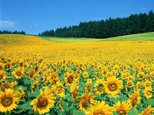 Những thiên đường hoa đẹp ngất ngây không thể không xem 15