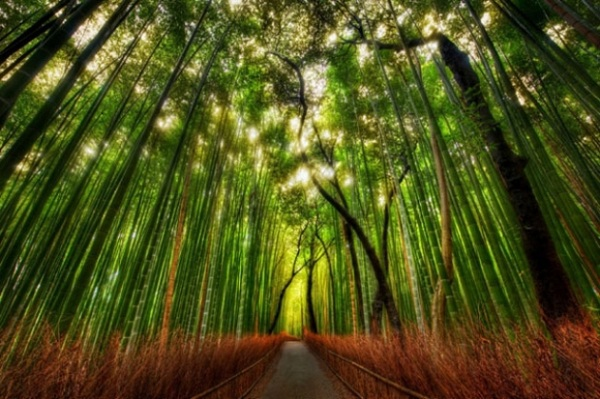 Những con đường tình yêu đẹp ngỡ ngàng trên thế giới 24