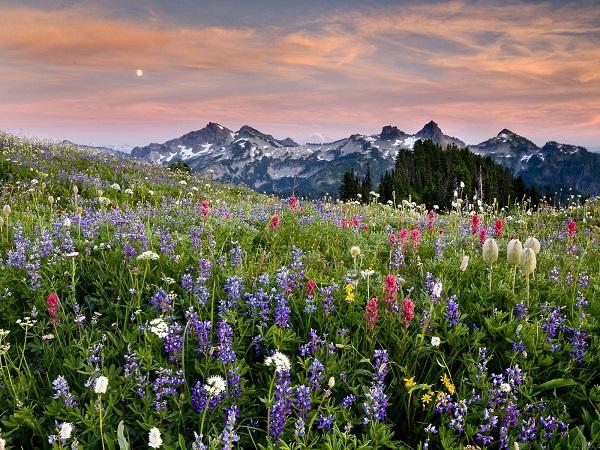 Những thiên đường hoa đẹp ngất ngây không thể không xem 24