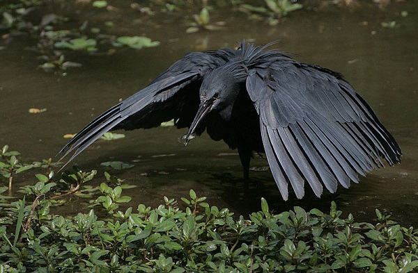 """Xem cách săn mồi """"bá đạo"""" của các loài chim 1"""