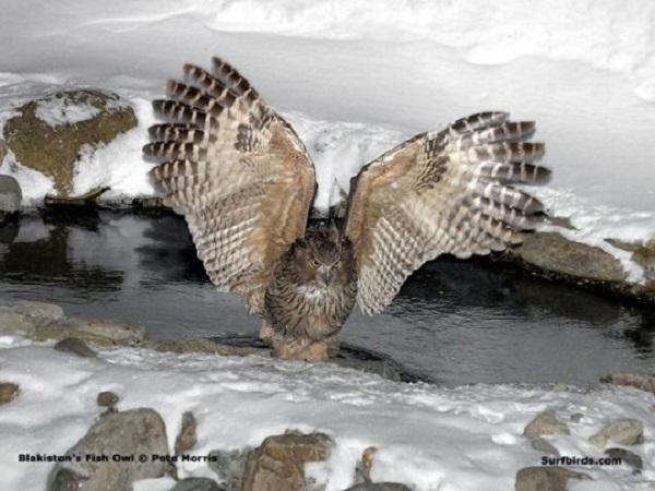 """Xem cách săn mồi """"bá đạo"""" của các loài chim 7"""