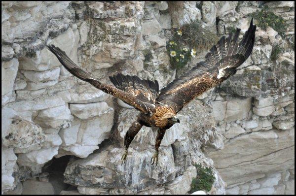 """Xem cách săn mồi """"bá đạo"""" của các loài chim 9"""