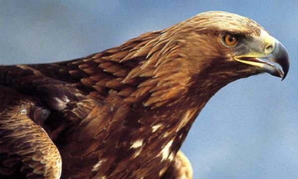 """Xem cách săn mồi """"bá đạo"""" của các loài chim 10"""
