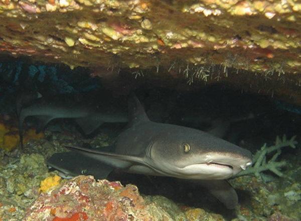 """Những sinh vật biển """"quái lạ"""" ở rạn san hô 13"""
