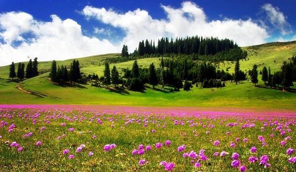 """Những thảo nguyên xanh trải dài """"bất tận"""" trên thế giới 2"""