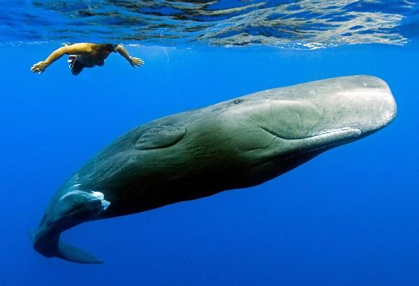 Khả năng thích nghi với môi trường đến khó tin của động vật 14