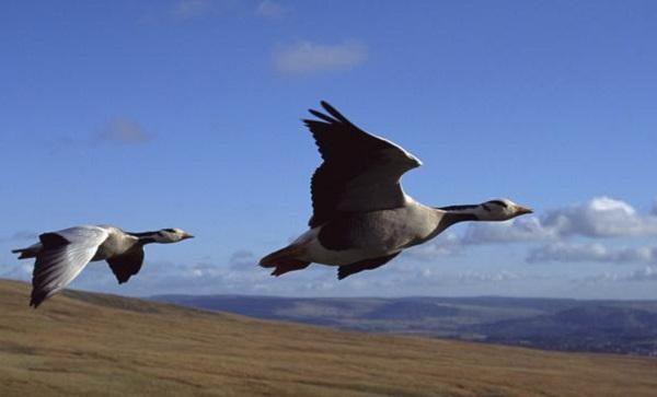 Khả năng thích nghi với môi trường đến khó tin của động vật 16