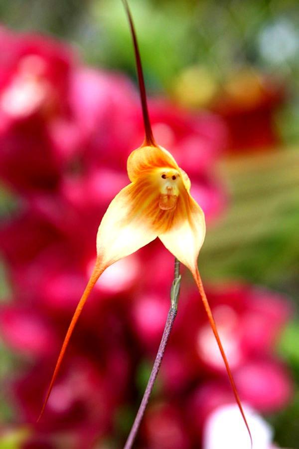 Các loài thực vật có hình dáng từ hài hước đến đáng sợ 7