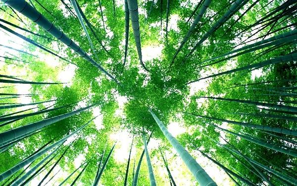 Điểm mặt những loài cây