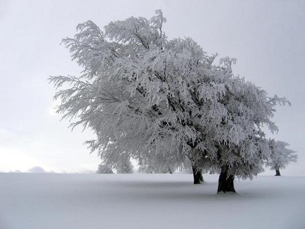 6 hiện tượng thiên nhiên tuyệt đẹp chỉ có vào mùa đông 8