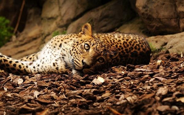 """Choáng với kiểu """"tính tiền"""" săn bắn động vật quý hiếm ở Châu Phi 8"""